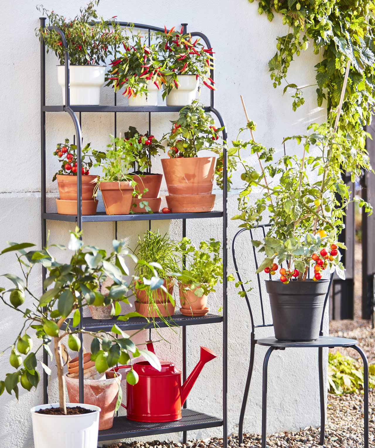 IKEA Ideas - It's the season for planting kits