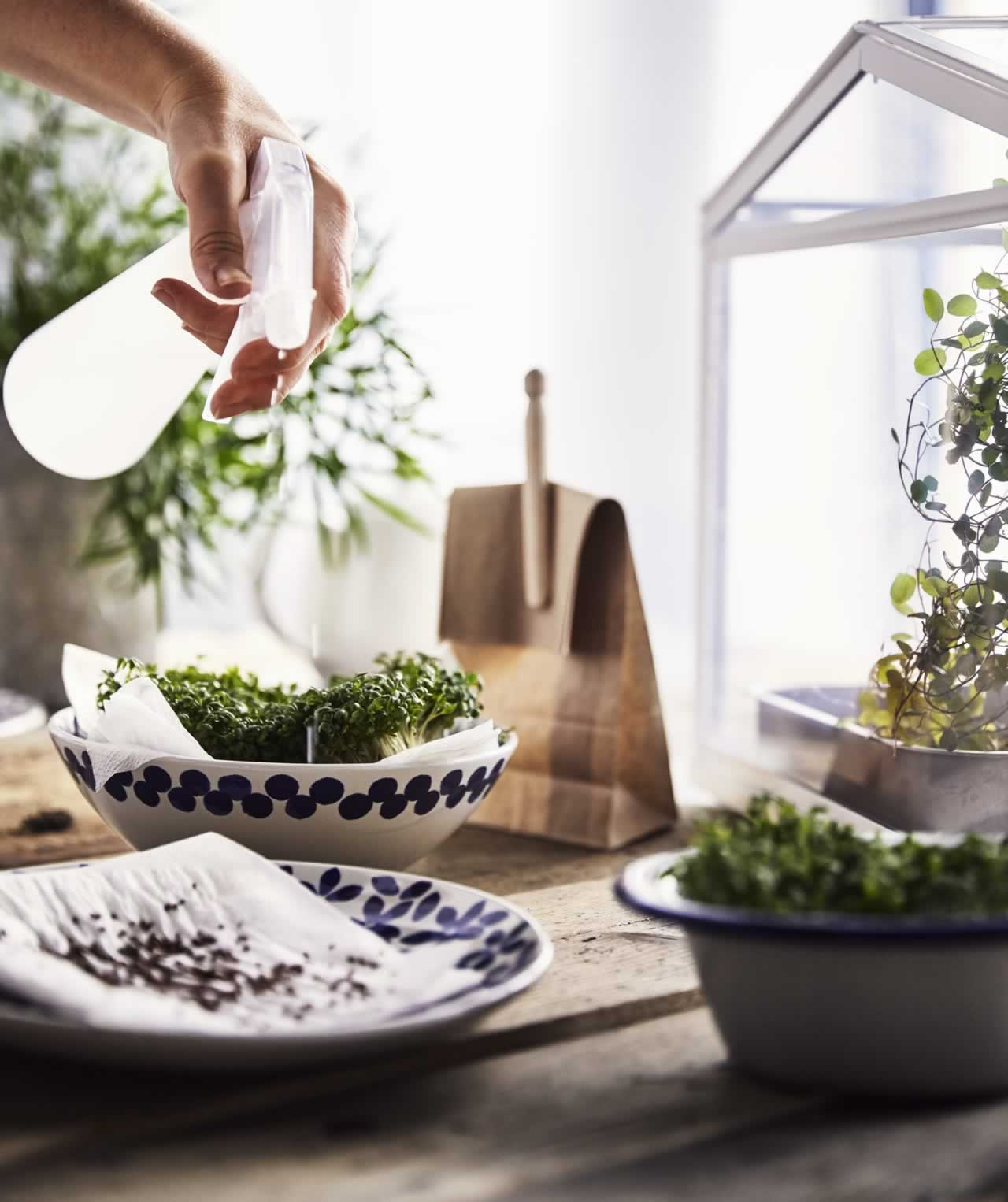 IKEA Ideas - The good effects of growing plants