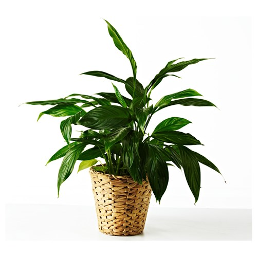 FRIDFULL,plant pot